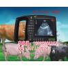 小型B超动物B超测孕仪 HRQ-2000AV