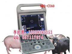 天津宠物医院小猫小狗专用B超机,宠物B超机价格