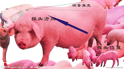 猪b超机的使用方法详细说明