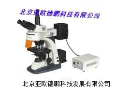 DP-300荧光显微镜(四色激发)/显微镜