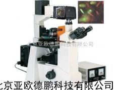 DP-XDS-500C倒置荧光显微镜/