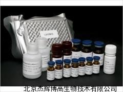 兔补体1抑制因子(C1INH)ELISA试剂盒说明书
