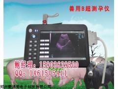 牛用B超报价牛用B超哪家好奶牛超声诊断仪采购
