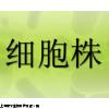MG-63细胞株,人成骨肉瘤细胞株,细胞系