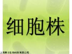 RF/6A细胞株,猴脉络膜-视网膜(内皮)细胞,传代细胞