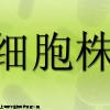 传代细胞,WEHI 231细胞,小鼠B淋巴细胞