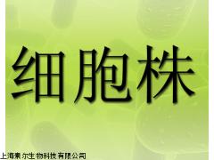 传代细胞,VERO C1008 (E6)细胞,非洲绿猴肾细胞