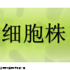 TE671 subline No.2细胞,人横纹肌肉瘤细胞