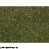 T98G细胞*人胶质母细胞瘤细♀胞