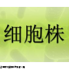 JEG-3细胞系,传代细胞,人绒毛膜癌细胞