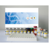 人穿孔素/成孔蛋白(PF/PFP)ELISA试剂盒厂家