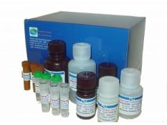 豚鼠钩端螺旋体IgG(Lebtospira)试剂盒