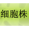 OV1063细胞 人卵巢上皮细胞癌细胞 OV1063