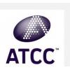 白色念珠菌,ATCC10231,ATCC