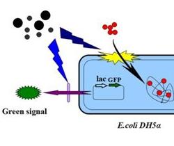 高通量纳米材料生物毒性检测技术取得进展