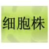 人食道组织来源细胞,HEF 细胞