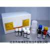 白细胞介素6(IL-6)ELISA试剂盒