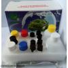 PI3K檢測試劑盒(人)