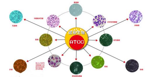 细胞室的设计平面图