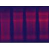 核酸印跡膜染液