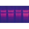 SABC(兔IgG)-POD免疫组化试剂盒