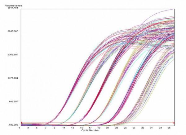 检测试剂盒(rt-pcr)    荧光定量pcr的基本原理就是在pcr扩增过程中