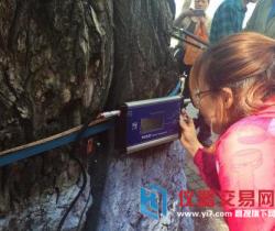 厉害!哈尔滨利用传感器检测城市大树健康情况