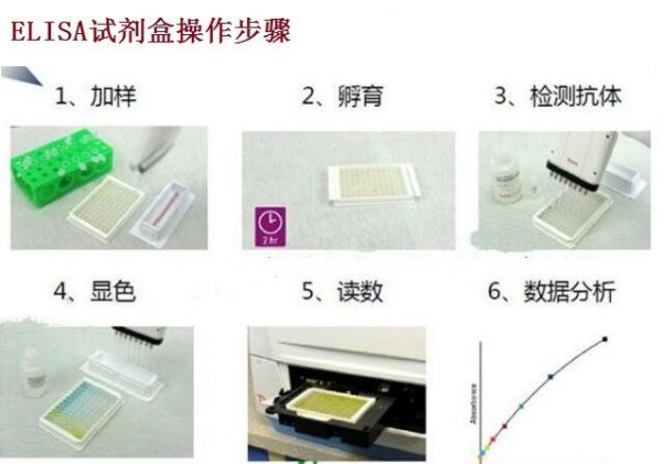 鸡B因子(BF)ELISA试剂盒操作步骤